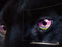 Product Review: LG 55EG920V 4K OLED TV